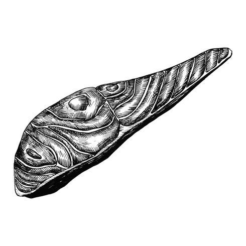 Filé de peixe salmão desenhado a mão