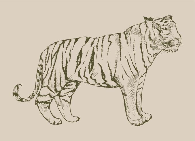 Dibujo estilo ilustración de tigre