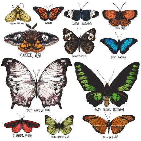 Affiche papillon divers