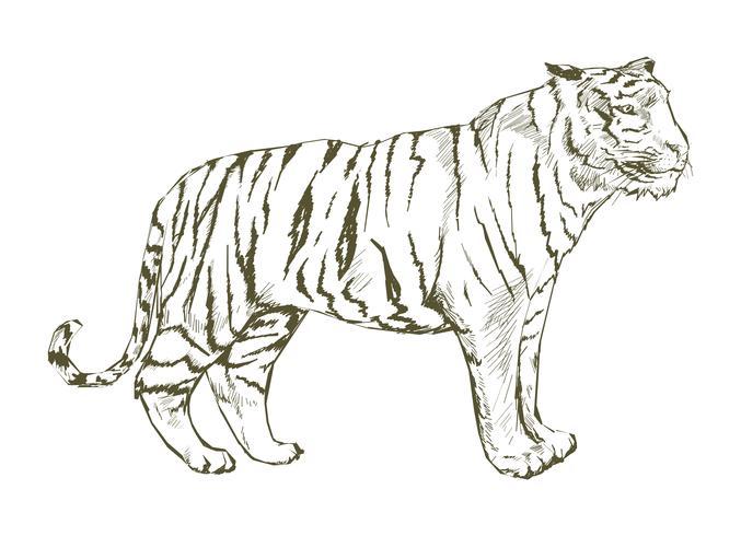 Estilo de desenho de ilustração de tigre