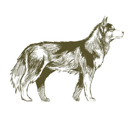 Illustration ritning stil av hund
