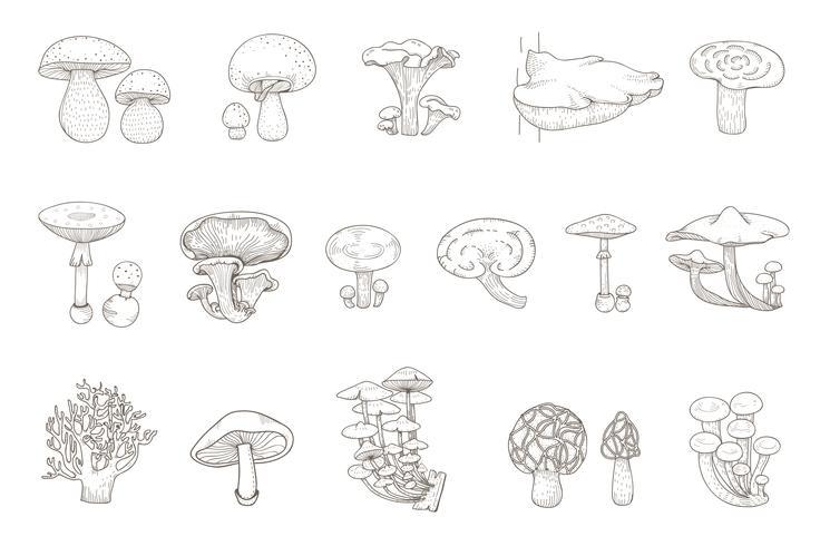 Drawing set of mushrooms