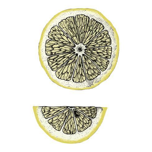 Hand getrokken schijfje citroen