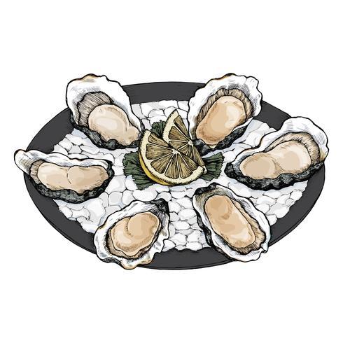 Hand getrokken oester zout water tweekleppige schotel