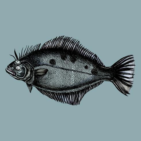Handdragen flounder platta