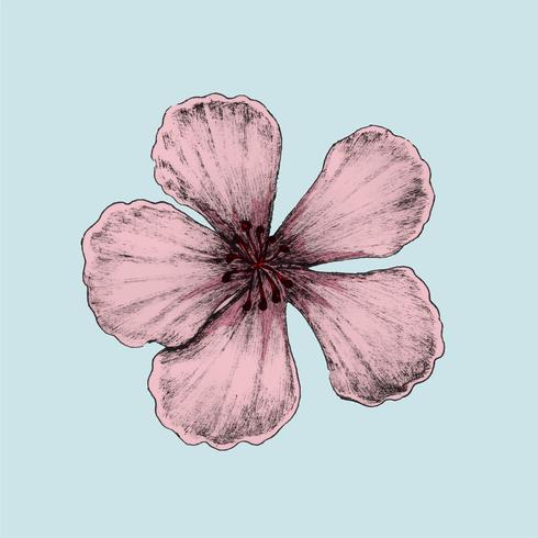 Illustrazione del fiore di ciliegio