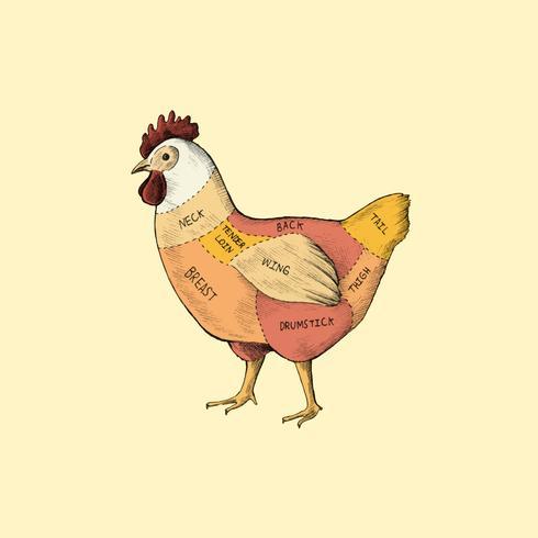 Ilustração de diferentes partes da galinha