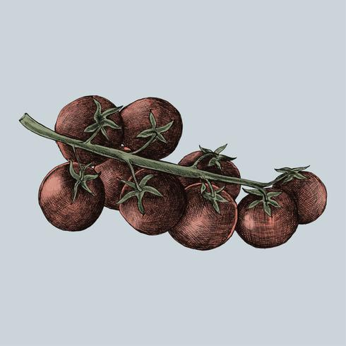 Ilustración de tomates cherry frescos