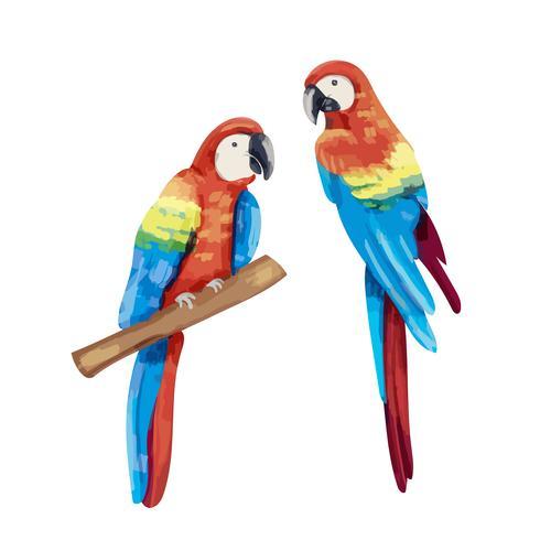 Paire de perroquets dessinés à la main
