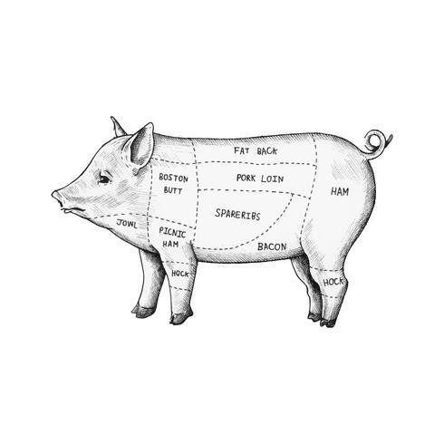 Hand getrokken deel van varken