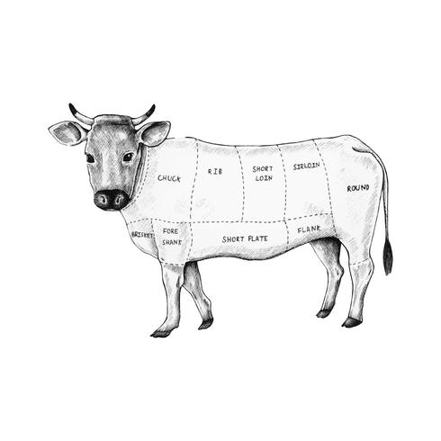 Mão desenhada corte de carne