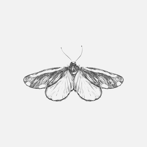 De stijl van de illustratietekening van vlinder