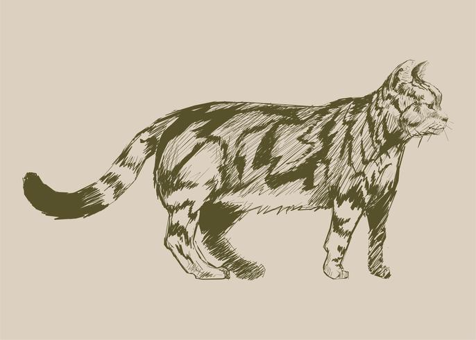 De stijl van de illustratietekening van kat