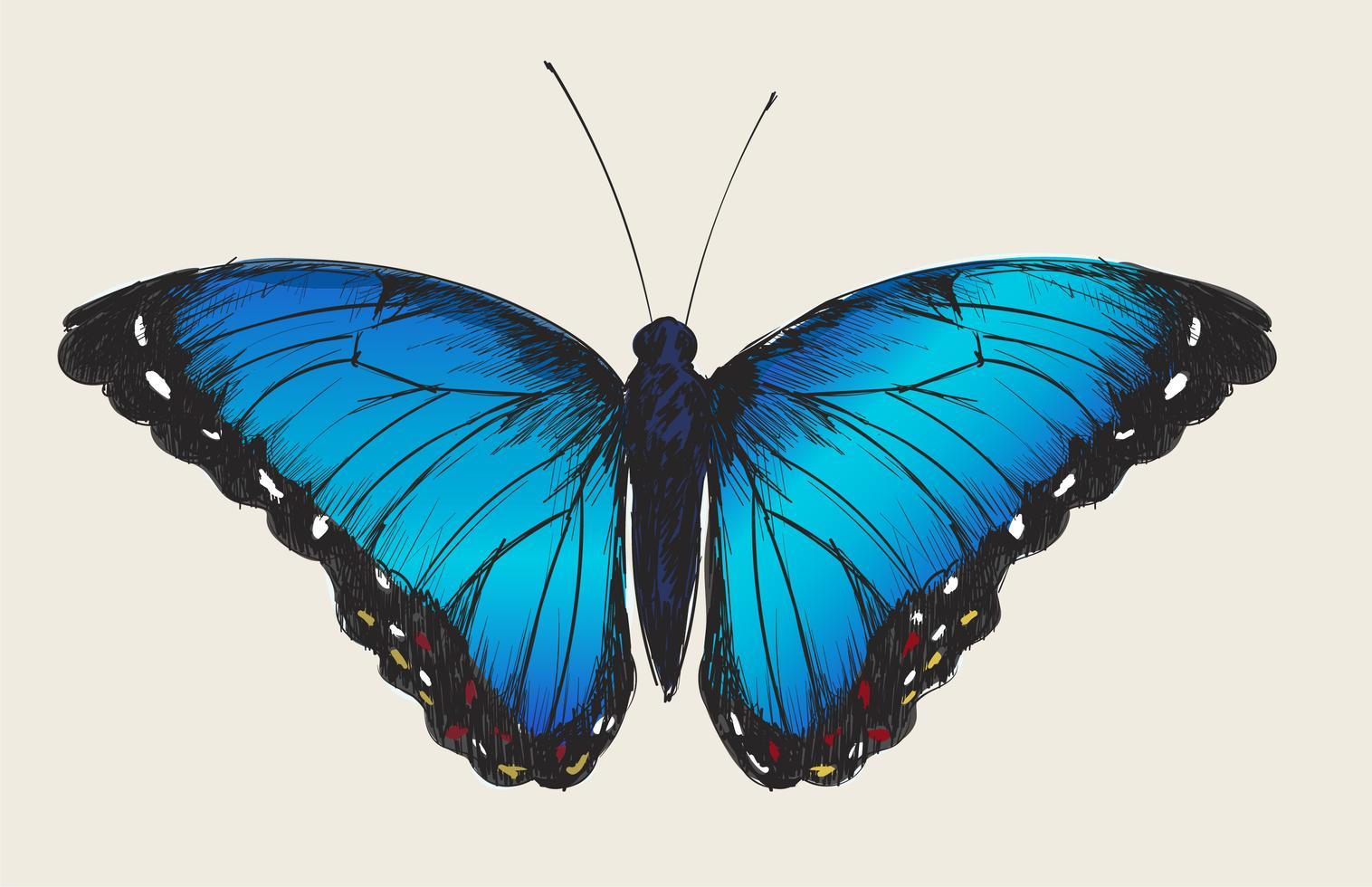 Papillon teen