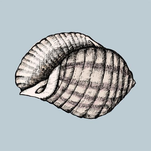 Hand getekend conch shell geïsoleerd