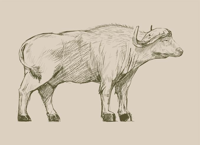 De stijl van de illustratietekening van buffels