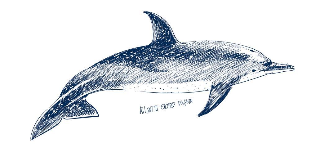 Illustrationszeichnungsart des atlantischen punktierten Delphins