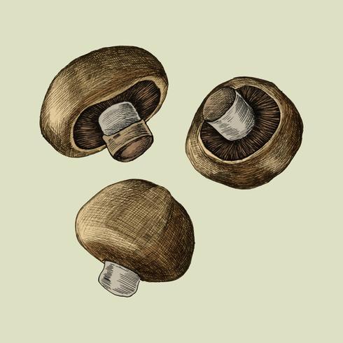 Ilustração, de, três, fresco, cogumelos