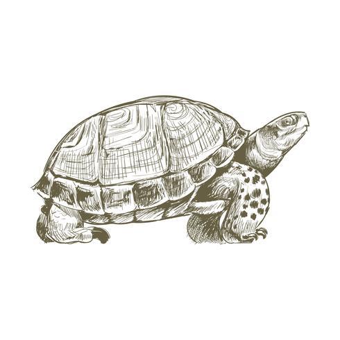 Dibujo estilo ilustración de tortuga.