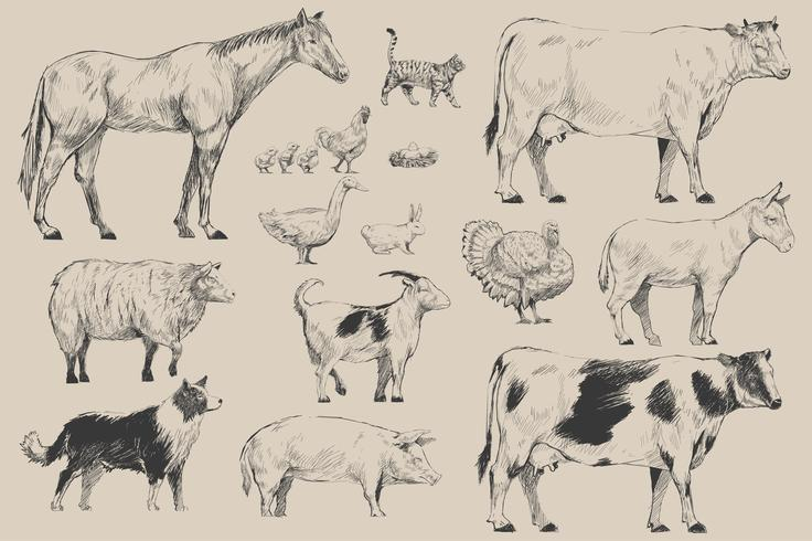 De stijl van de illustratietekening van de inzameling van landbouwbedrijfdieren