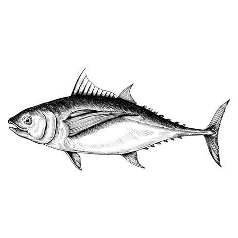 Hand drawn tuna fish