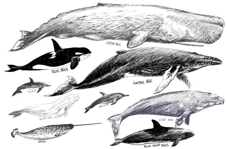 Illustrazione stile di disegno della collezione di balene
