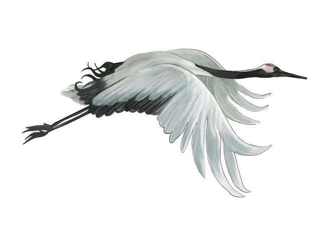 Flyga elegant vit japansk kran