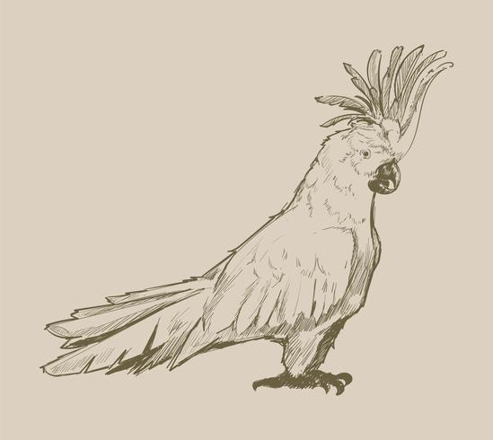 Illustrationszeichnungsart des Papageis