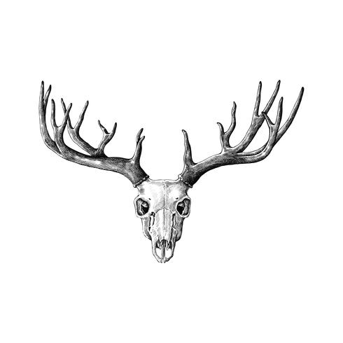 Hand drawn antlers isolated on white background