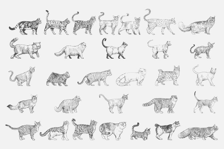 Style de dessin d'illustration de la collection de races de chats