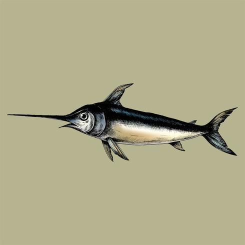 Hand drawn swordfish isolated