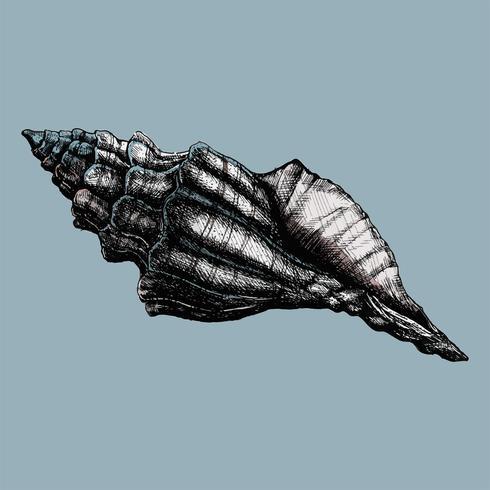 Hand getekend conch sea shell geïsoleerd