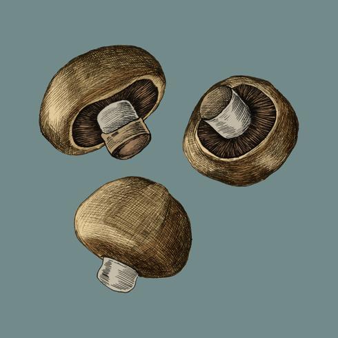 Ilustración de tres setas frescas