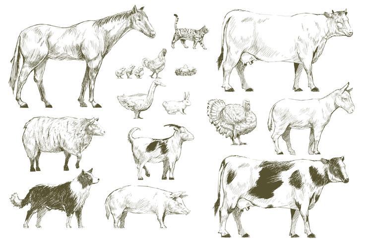 Illustration ritning stil av husdjur samling