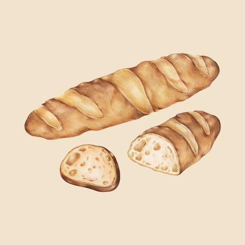 Illustrazione disegnata a mano delle baguette di recente al forno