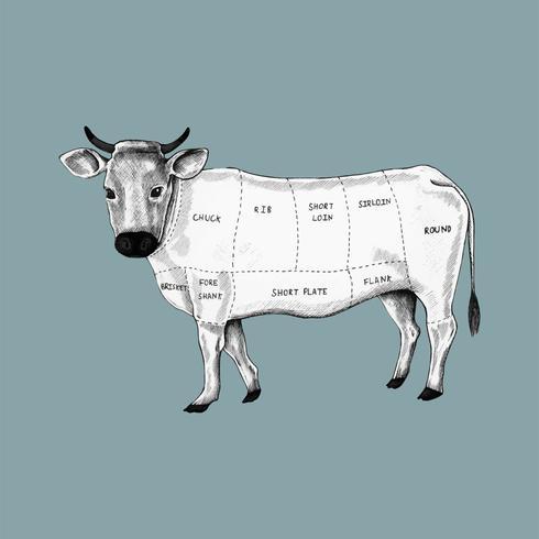 Ilustração, de, diferente, partes, de, vaca