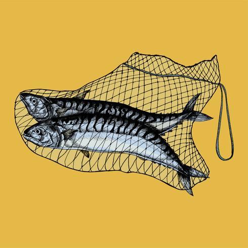 Hand getrokken gevangen makreel op het net