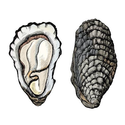 Hand getrokken oester zoutwater tweekleppige