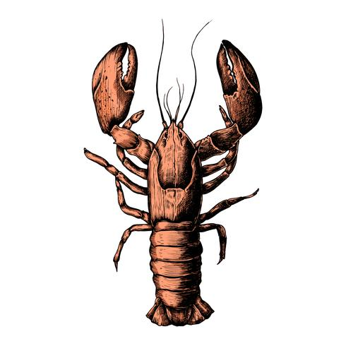 Hand drawn lobster isolated