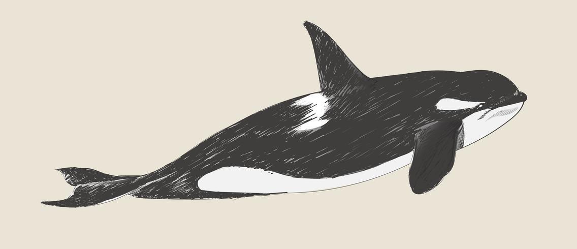Estilo de dibujo de ilustración de la orca
