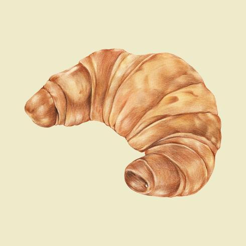 Frisch gebackene von Hand gezeichnete Illustration des Hörnchens