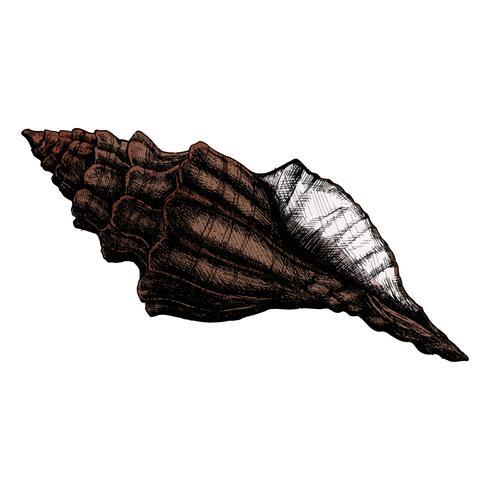 Hand gezeichnete Muschelseeoberteil lokalisiert