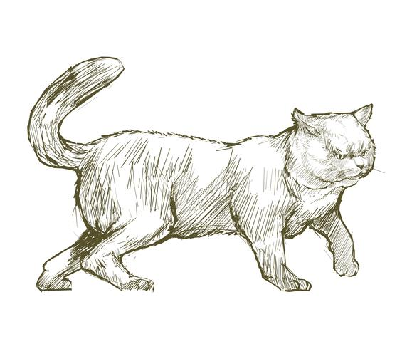 Illustration drawing style of cat