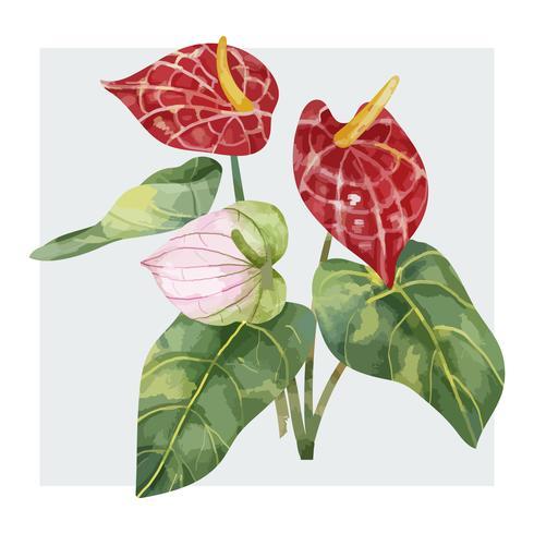 Flor de Laceleaf vermelho desenhada de mão