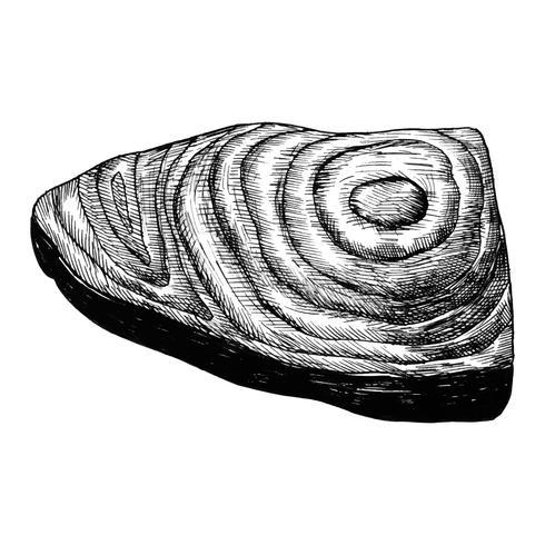 Filete de salmón dibujado a mano