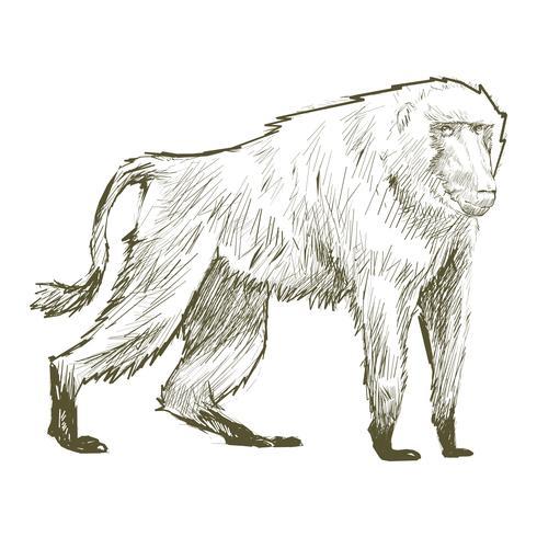 De tekeningsstijl van de illustratie van aap