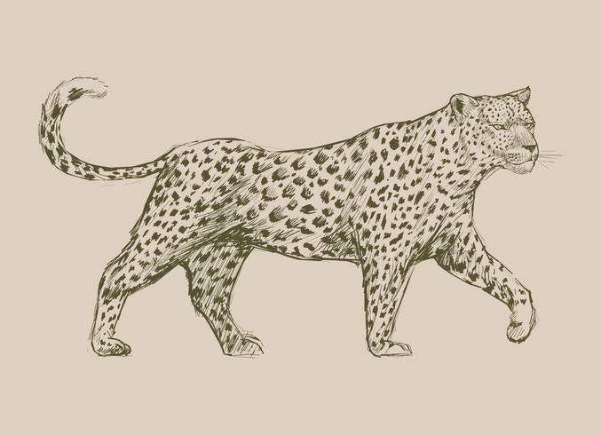 Tiere Illustration Vektor Kunst Set
