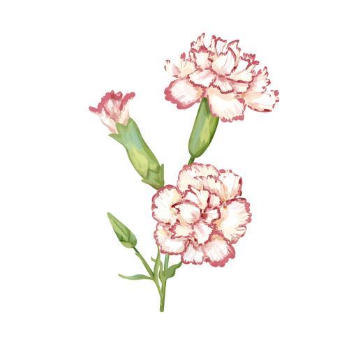 Hand getekend anjer bloem illustratie