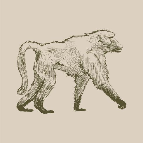 Ilustración de dibujo estilo de mono