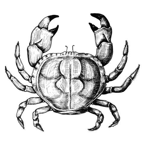 Handdragen krabba isolerad